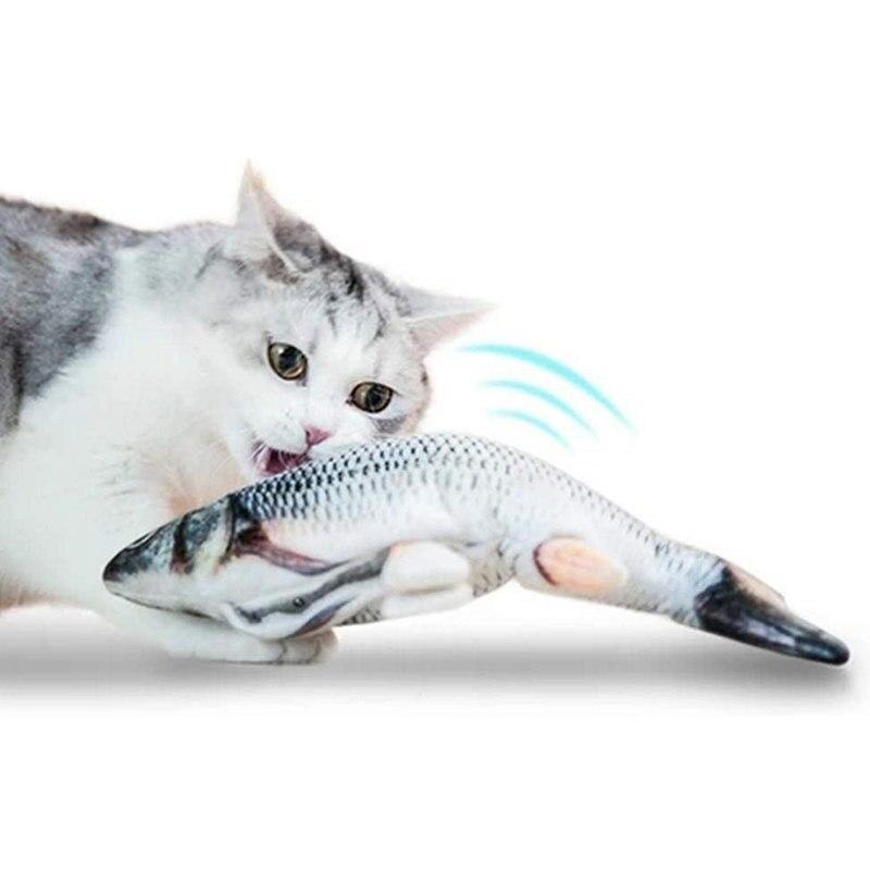 Fisch Video Für Katzen